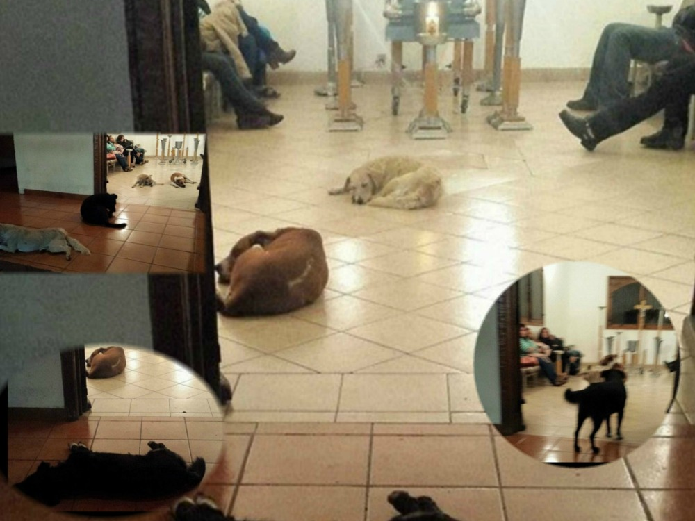 Stray dogs attending to  deceased Mexican woman who used to feed them in life.