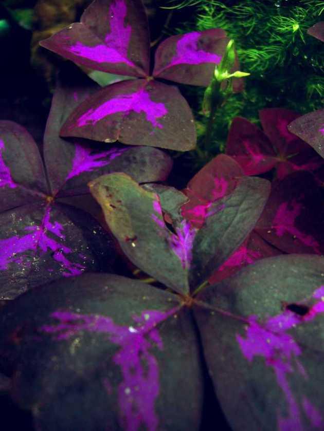 Southeast Asia Philippines Bicol Camarines Sur Balai Manuela Flowers 1