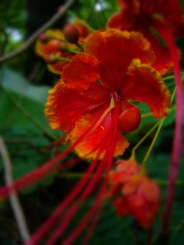 Southeast Asia Philippines Bicol Camarines Sur Balai Manuela Flowers 10