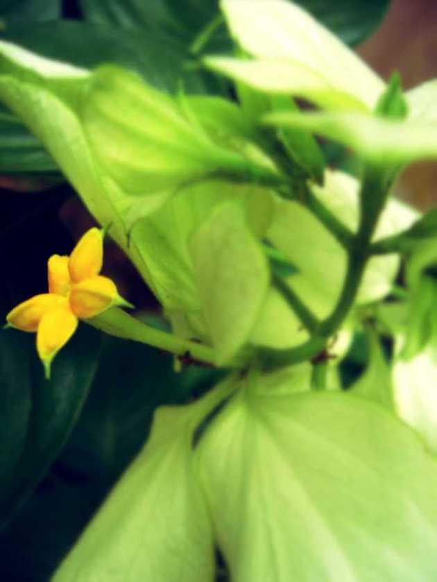 Southeast Asia Philippines Bicol Camarines Sur Balai Manuela Flowers 2