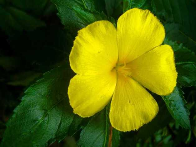 Southeast Asia Philippines Bicol Camarines Sur Balai Manuela Flowers 3