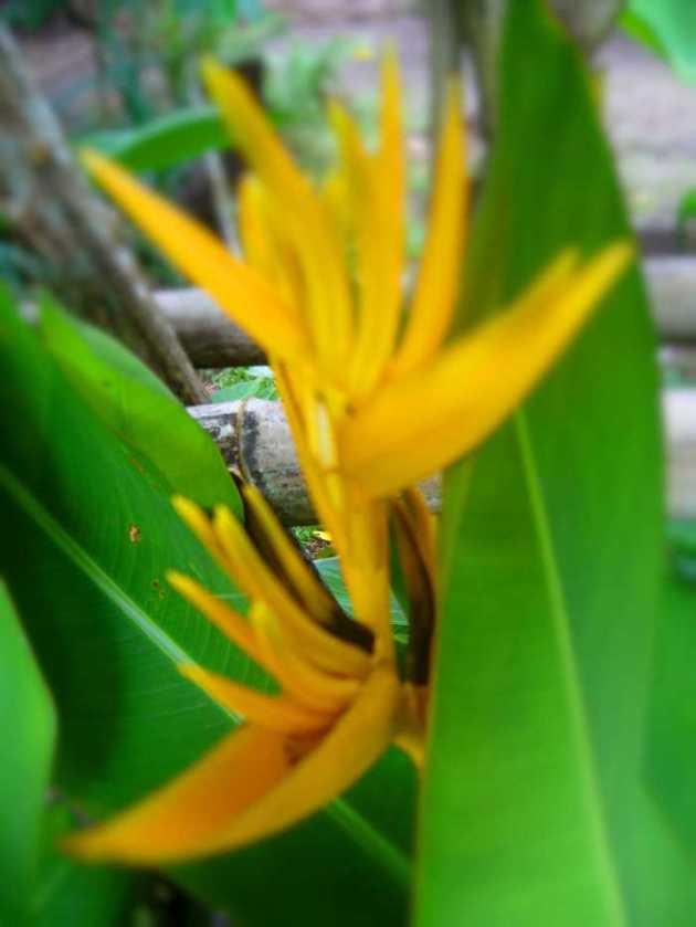 Southeast Asia Philippines Bicol Camarines Sur Balai Manuela Flowers 9
